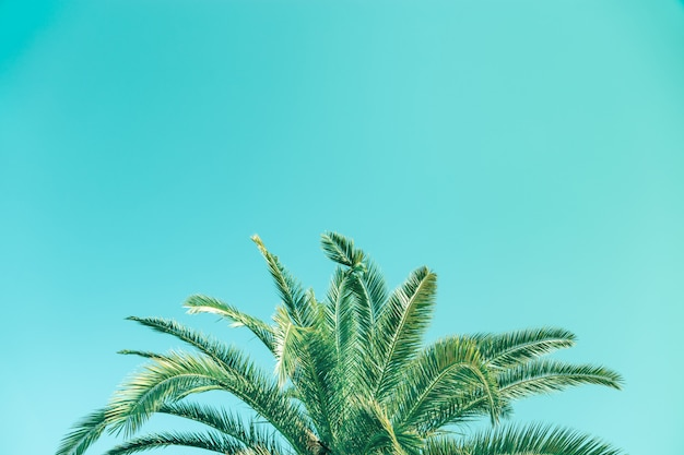 O vintage tonificou a palmeira sobre o fundo do céu com espaço da cópia.