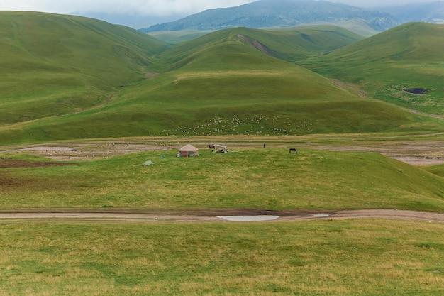 O yurt, ou casa do nômade fica perto das colinas verdes pontilhadas com ovelhas pastando e boranes, vida selvagem do cazaquistão