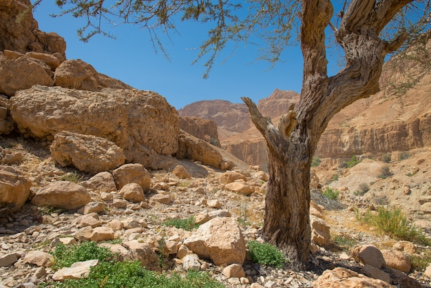 Oásis no deserto de en gedi na costa ocidental do mar morto em israel