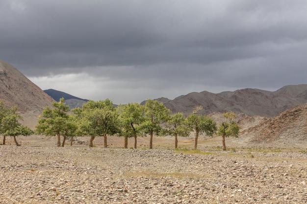 Oásis verde brotando do solo rochoso das montanhas de altai, mongólia