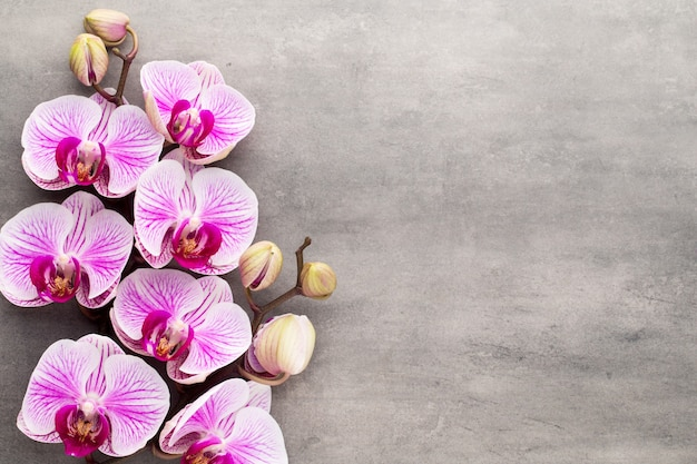Objetos de tema spa orquídea em fundo cinza.