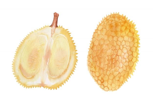Objetos em aquarela frutas exóticas brilhantes
