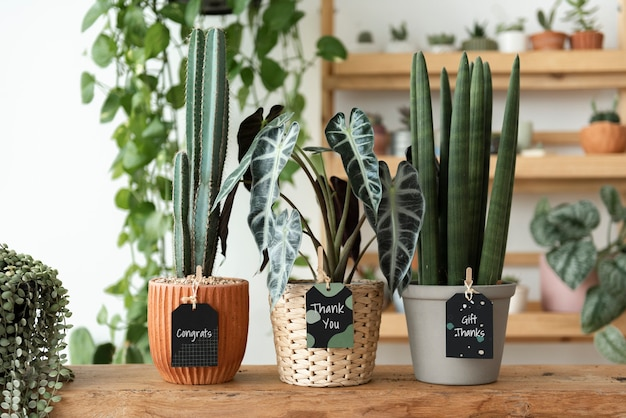 Obrigado, rótulos em plantas em uma floricultura
