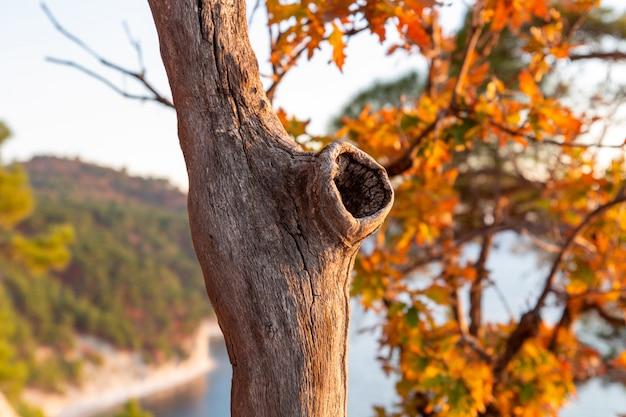 Oco na árvore no fundo da floresta de outono e o mar.