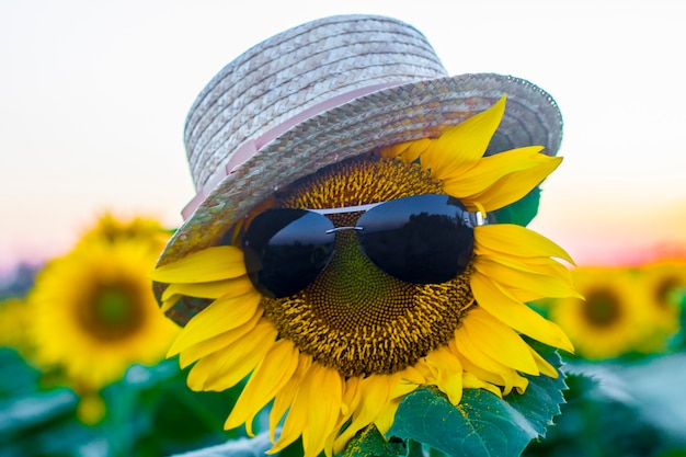 Óculos e um chapéu em um close-up de girassol. conceito ser especial