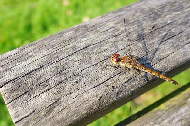 Odonata em repouso