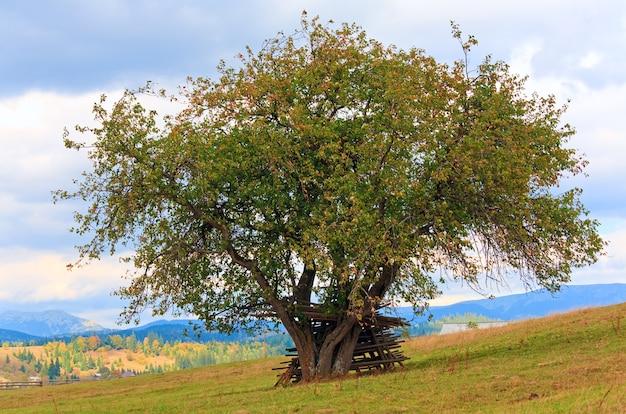 Ofereça uma bela árvore de outono e uma pequena vila nas montanhas na encosta da montanha (cárpatos. ucrânia)