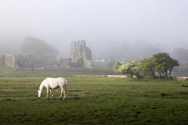 Ogmore castle misty morning