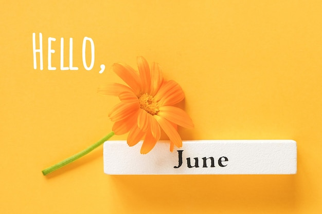 Olá, texto de junho, cartão de felicitações. uma flor de calêndula laranja e calendário de verão, mês de junho, sobre fundo amarelo. vista superior copiar espaço flat lay minimal style.
