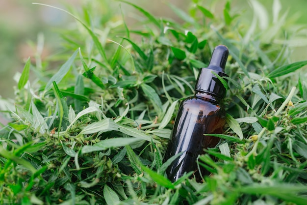 Óleo de cannabis, cbd óleo cannabis extrair, conceito de cannabis médica.
