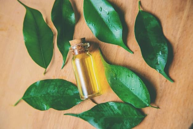 Óleo essencial da árvore do chá em uma pequena garrafa. foco seletivo.