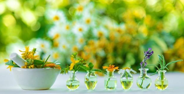 Óleos essenciais e extratos de ervas em pequenos frascos. foco seletivo. natureza.