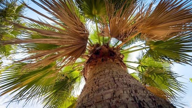 Olhando para o alto da palmeira e o sol brilhante.