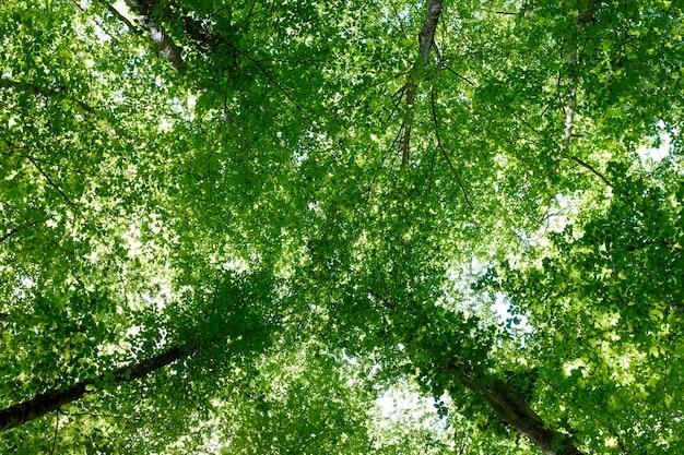 Olhando para o céu em uma floresta