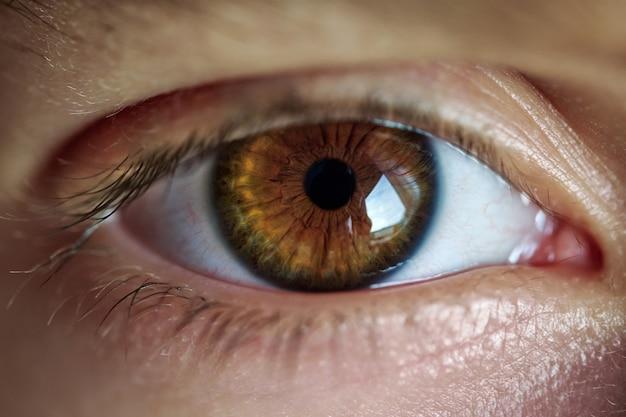 Olho castanho com cílios longos de pessoa