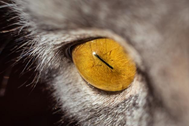 Olho de gato amarelo em close-up de perfil. gato tigrado cinzento. macro.