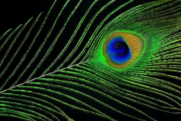 Olho de pavão. pena do pavão no fundo preto.