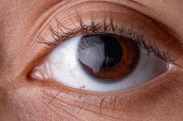 Olho humano castanho em alta ampliação olhando para frente