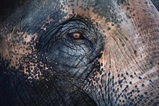 Olhos de elefante