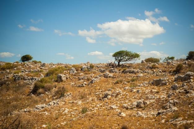 Oliveiras no lado da colina rochosa