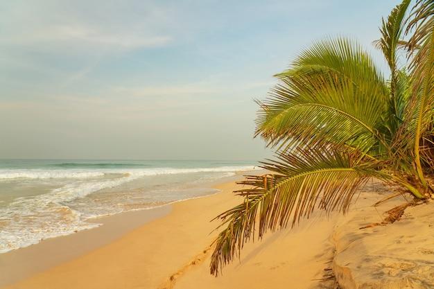 Ondas do mar na praia de areia com palmeiras