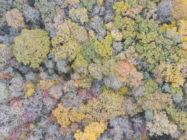 Opinião aérea do zangão da floresta colorida do outono. dia da terra, proteção do meio ambiente.