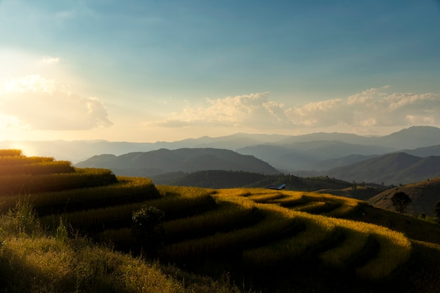 Opinião bonita da paisagem de terraços do arroz em chiang mai, tailândia.