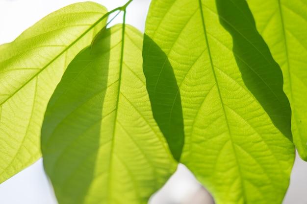 Opinião da natureza da folha verde sob a luz solar. plantas verdes naturais