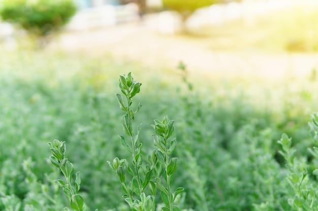 Opinião da natureza da paisagem da folha verde no jardim no verão sob a luz solar