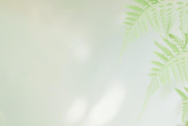 Opinião da natureza das folhas verdes frescas no jardim no verão, ecologia, conceito fresco do papel de parede