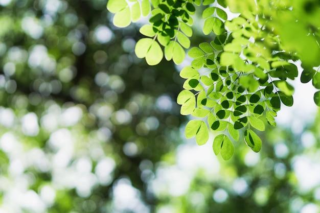 Opinião da natureza do close up da folha verde no fundo borrado da hortaliças com copyspace
