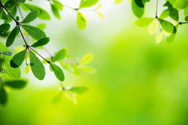 Opinião da natureza do close up da folha verde no fundo borrado da hortaliças com espaço da cópia