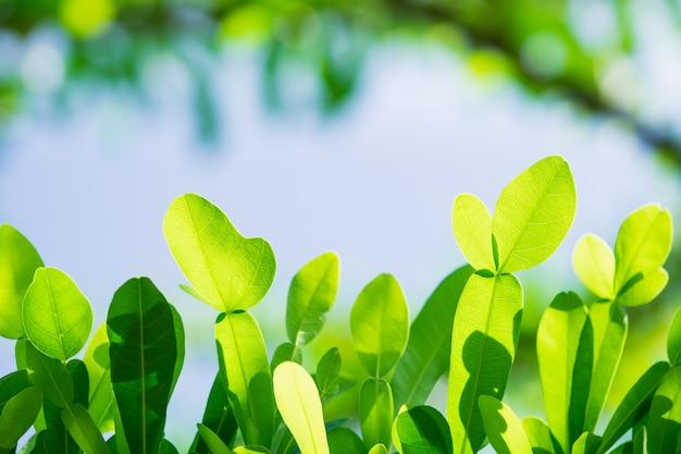 Opinião da natureza do close up da folha verde no fundo do céu usando como o conceito do fundo