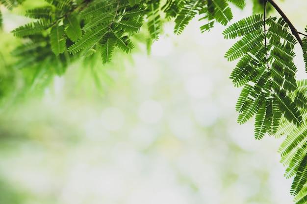 Opinião da natureza do close up da folha verde obscura com espaço da cópia usando como o conceito do fundo