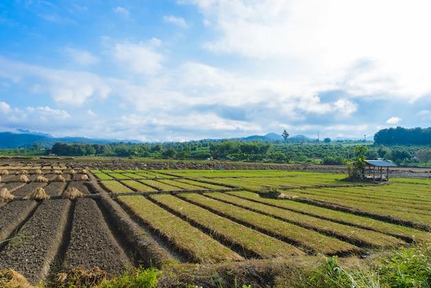Opinião da paisagem de um vegetal recentemente crescente da agricultura
