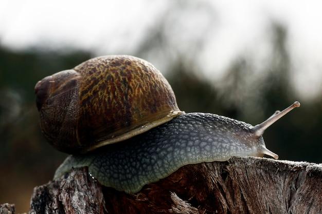 Opinião do close up de um caracol sobre um log de madeira.