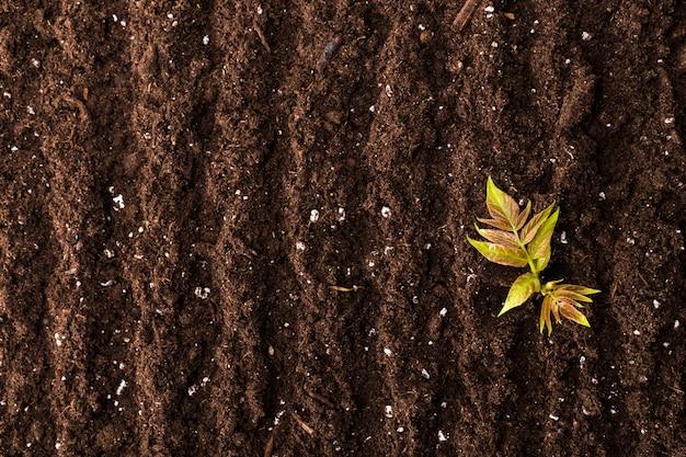 Opinião superior da superfície da planta verde da plântula