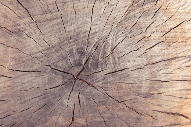 Opinião superior do fundo da textura do coto de tronco de árvore.