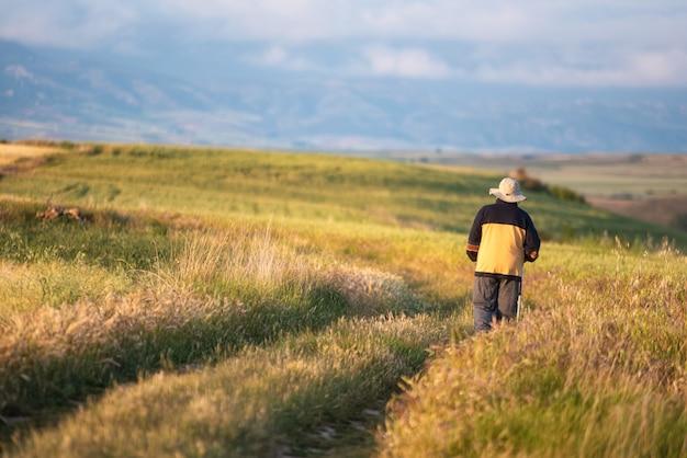 Opinião traseira o homem superior que anda através de um campo de trigo dourado.