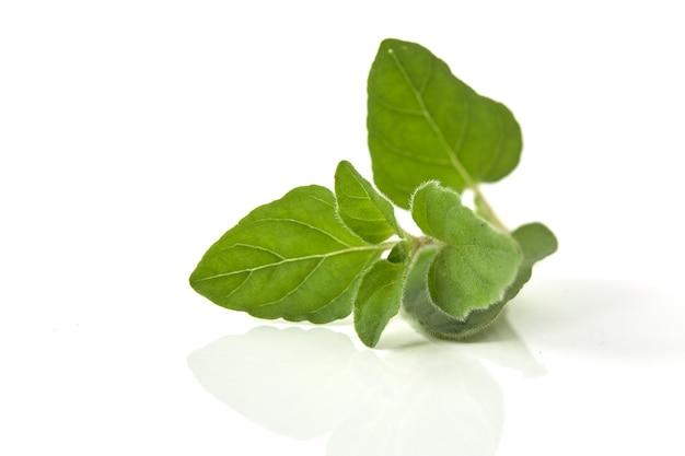 Orégano ou manjerona folhas no fundo branco