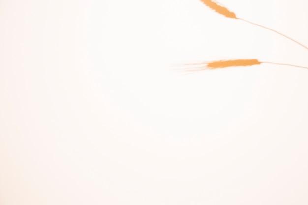 Orelha de trigo desfocado, isolada na esquina no fundo branco