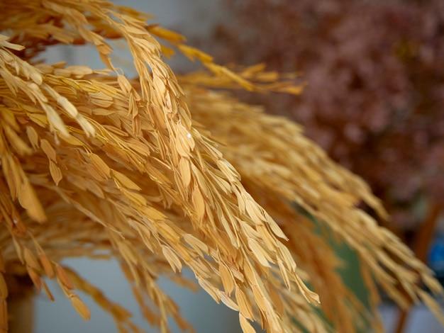Orelhas do trigo em um vaso verde pastel colocado em uma tabela do pão do cozimento. fechar-se