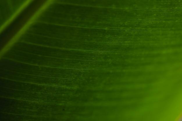 Ornamento na folha verde