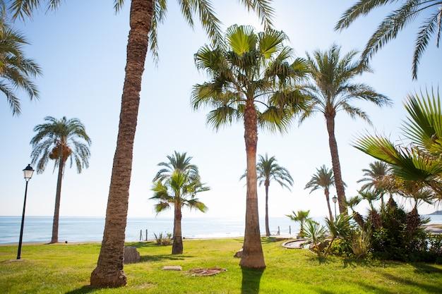 Oropesa de mar em castellon jardim de palmeiras no mediterrâneo