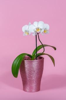 Orquídea branca em uma panela em um espaço rosa