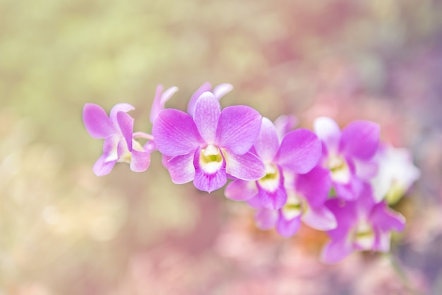 Orquídea buquê de cabeça de flor roxa na natureza