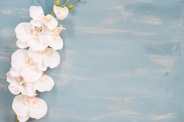 Orquídea com espaço de cópia