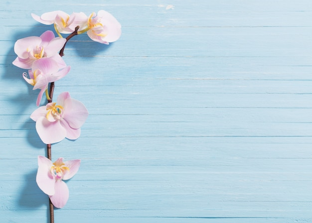 Orquídea em fundo azul de madeira