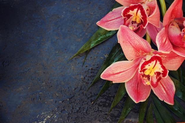 Orquídea em fundo preto