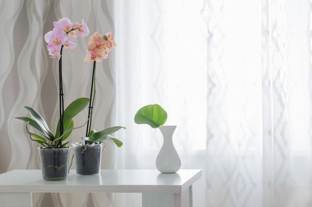 Orquídea na mesa no fundo da janela